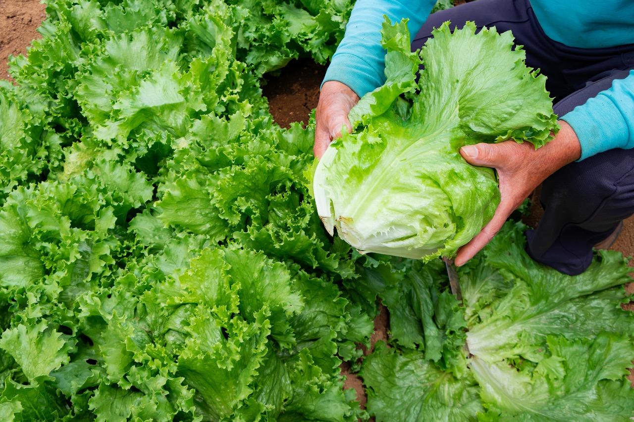 野菜_イメージ