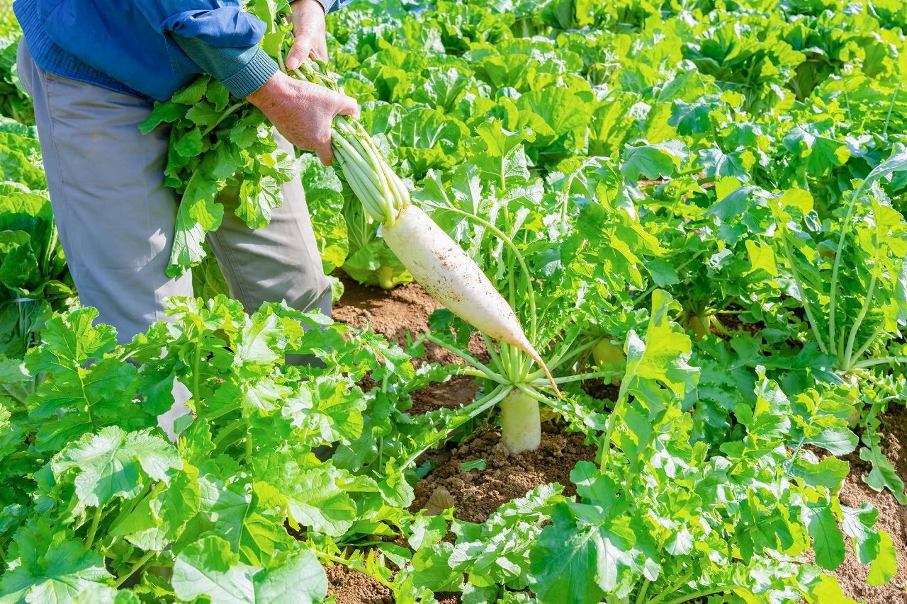 農業_イメージ