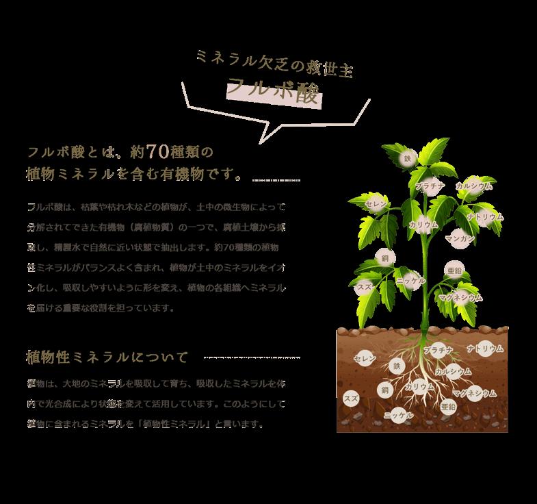 ミネラル欠乏の救世主 フルボ酸 フルボ酸とは、約70種類の植物ミネラルを含む有機物です。 フルボ酸は、枯葉や枯れ木などの植物が、土中の微生物によって分解されてできた有機物(腐植物質)の一つで、腐植土壌から採取し、精製水で自然に近い状態で抽出します。約70種類の植物性ミネラルがバランスよく含まれ、植物が土中のミネラルをイオン化し、吸収しやすいように形を変え、植物の各組織へミネラルを届ける重要な役割を担っています。 植物性ミネラルについて 植物は、大地のミネラルを吸収して育ち、吸収したミネラルを体内で光合成により状態を変えて活用しています。このようにして植物に含まれるミネラルを「植物性ミネラル」と言います。