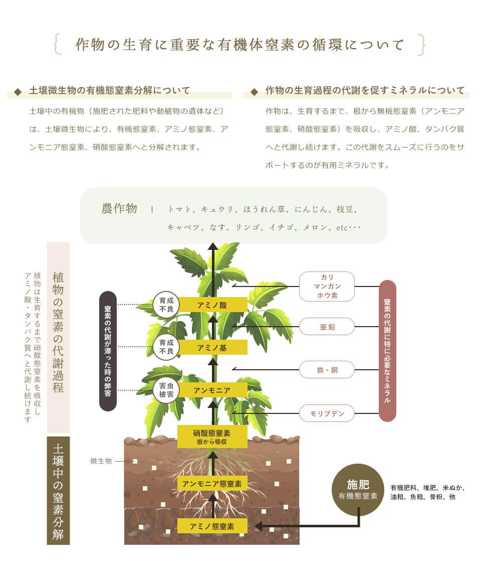 作物の生育に重要な有機体窒素の循環について