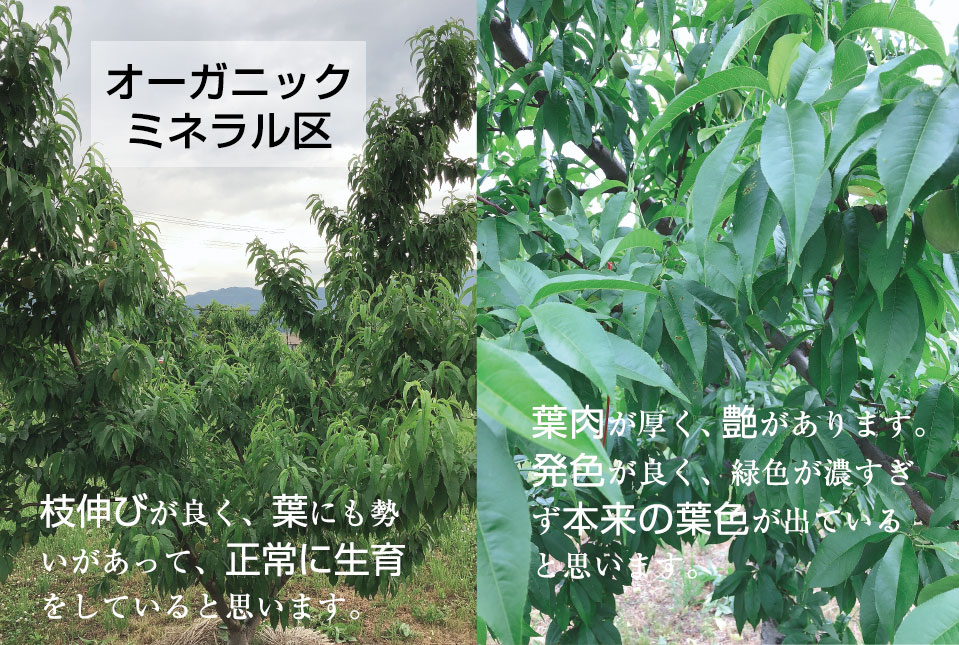 fieldtest_peach02